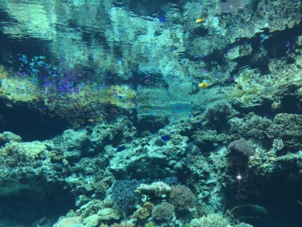 美ら海13
